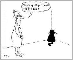 chat_boudeur